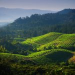 Beautiful_vineyard_13
