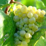 winery-300x200